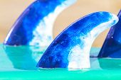 picture of fin  - picture of the surf board fins on the beach - JPG