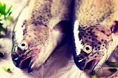 foto of brook trout  - Raw mackerel fish heads on the paper - JPG