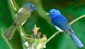 image of jungle birds  - Black - JPG