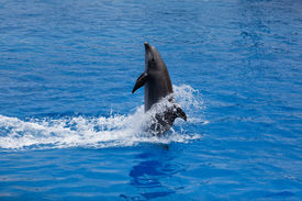 stock photo of cetacea  - A Young Dolphin At City Of Science - JPG