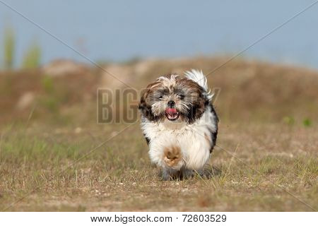 Little Puppy Is Running