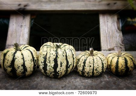 Row Of Organic Pumpkins