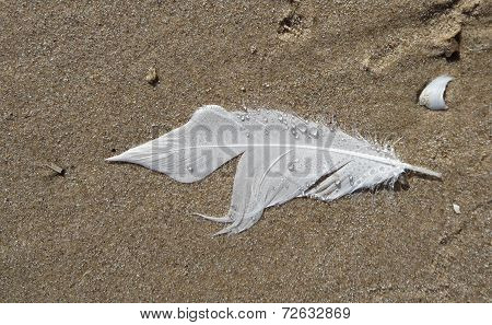 White Feather in the Sand