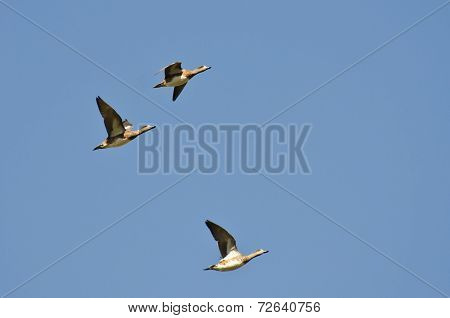American Wigeons Flying In A Blue Sky