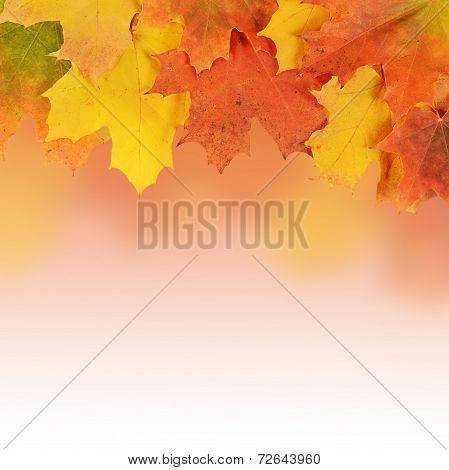 The Autumn Maple Leaves A Background