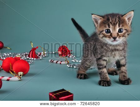Christmas Group Portrait Of Kitten