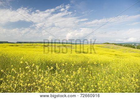 Meadow Of Rape.
