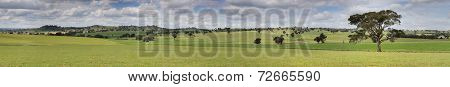 Canowindra Pastoral Countryside Landscape Panorama