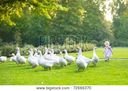 Funny Baby Girl Chasing Wild Geese In A Park On A Beautiful Autumn Evening
