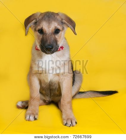 Yellow With Black Markings Puppy Sitting On Yellow