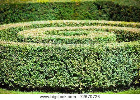 Green Hedge Labyrinth