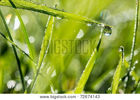 Blades Of Fresh Green Grass With Dewdrops