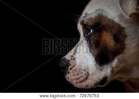 Dog on black background