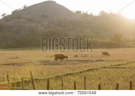 Flores Farmland