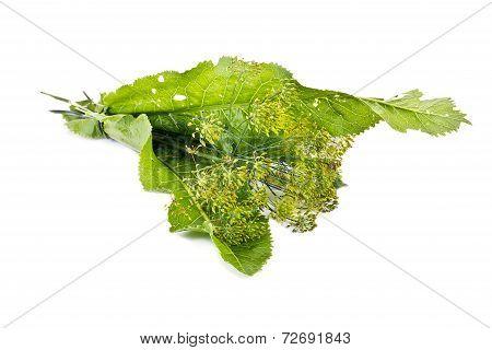 Grass For Pickling
