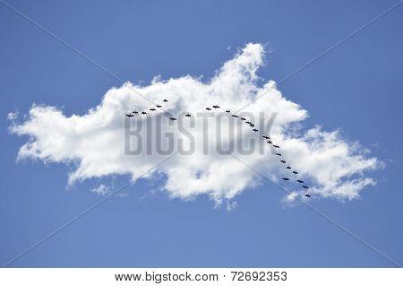 Nube y bandada de pájaros