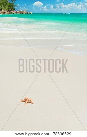 Sea Star At Tropical Beach Anse Georgette At Island Praslin, Seychelles