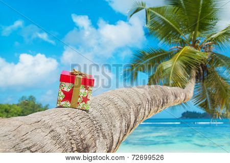 Holiday Gift Box With Bow On Coconut Palm Tree At Exotic Tropical Beach