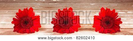 Horizontal panorama with red gerbera on a wooden background