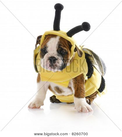 Puppy Dressed Up Like A Bee