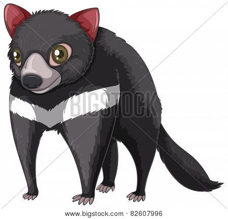 Illustration of a close up tasmanian devil
