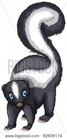 Illustration of a single skunk standing