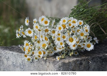 Bouquet Of Field Pharmacy Chamomile