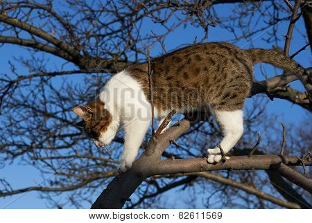 Cat On The Tree Against The Sky
