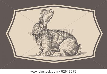 Illustration of a rabbit engraving  style.