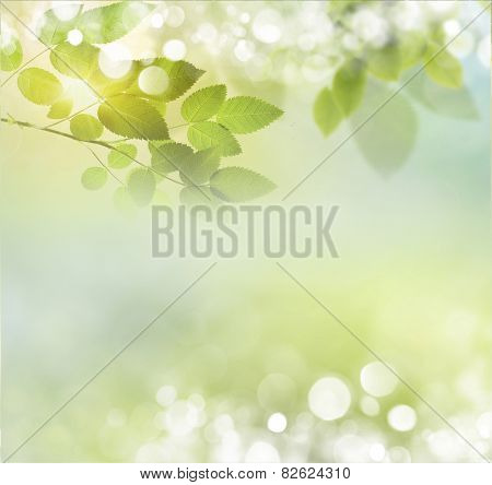 Beauty natural spring background with daisies. Boke