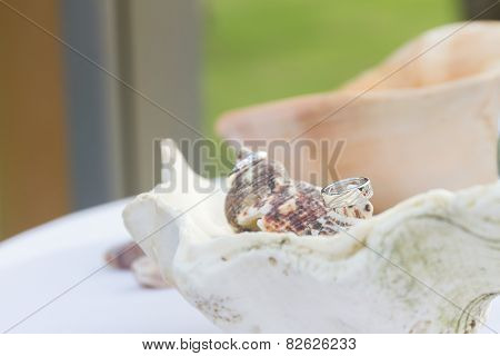 wedding rings on shell, outdoor tropical wedding