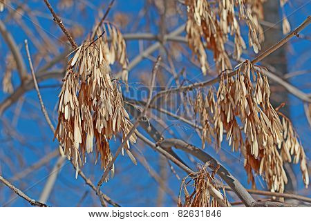 Ash In The Winter Time.