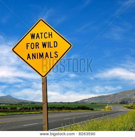 Rare Road Sign
