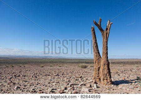 Dead Kokerboom