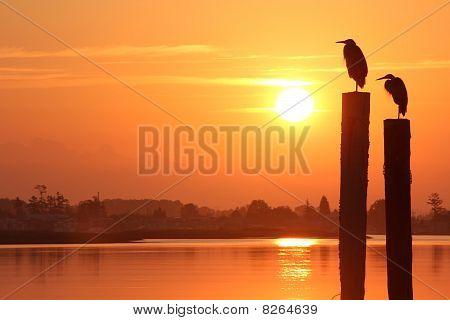 Fraser River Herons at Sunrise