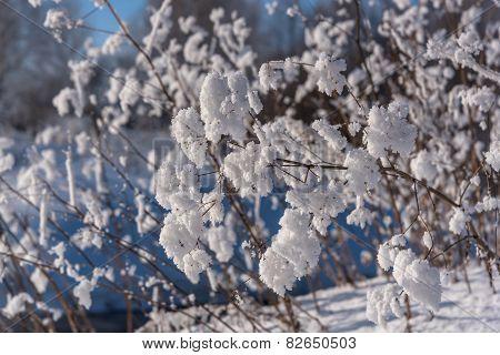 Grass Snow Pattern Background