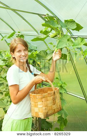 Girl Picking Cucumber In The Hothouse