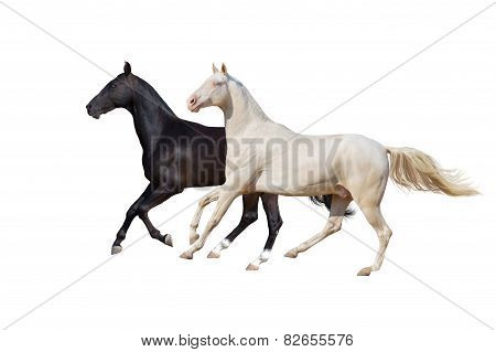Two horse isolated on white