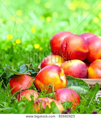 Ripe Nectarines