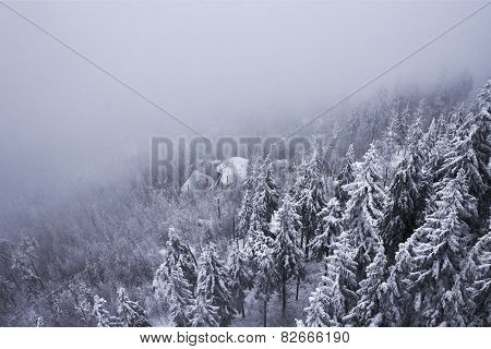 Snow Covered Mountainside Forest Disappearing In Fog