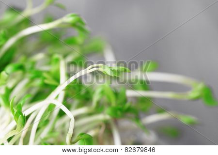 Fresh cress salad on light blurred background