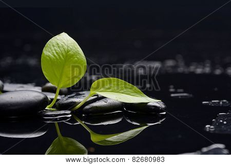 Green leaf with black stones on wet background