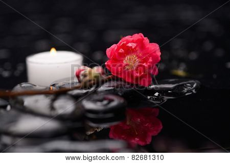 Still life with red cherry blossom with candle on black stones