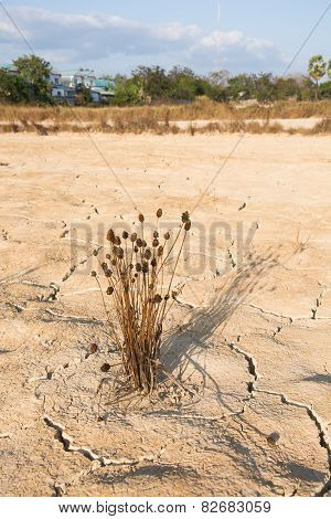 Weed drying and Dry soil in arid areas