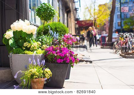 Bright flowers in a pot at New York streets