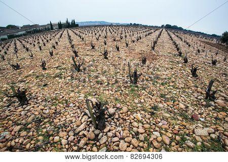 Old Vineyard On Stony Ground
