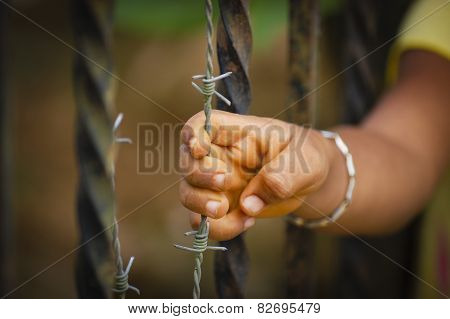 Child gripping a barbed wire