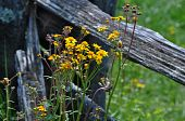 image of split rail fence  - Rustic split rail fence along the Blue Ridge Parkway in North Carolina with spring flowers - JPG