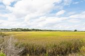 picture of marshes  - A wetland marsh with grasses and trees - JPG