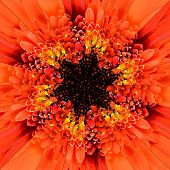 picture of symmetrical  - Orange Flower Center Symmetric Collage Made of Collection of Various Wildflowers - JPG